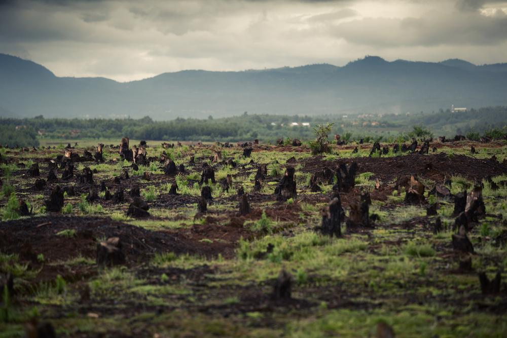 【国際】UNEPおよびNCP、金融機関向けに森林破壊リスク削減に向けた投融資方針策定ツールを公表