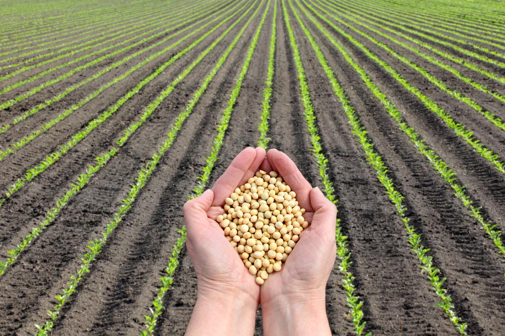 【国際】大手食品・飲料ブランドは農業サプライチェーンの気候変動リスクを認識すべき。CDP調査