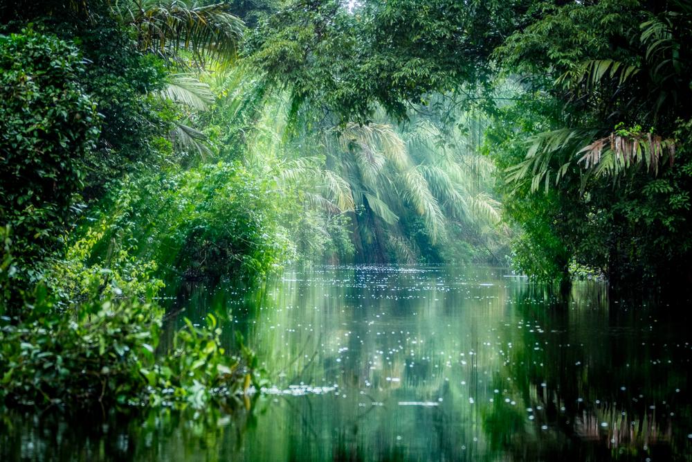 【アメリカ】SCジョンソン、アマゾン熱帯雨林保護でマッチング寄付プログラムを開始 1