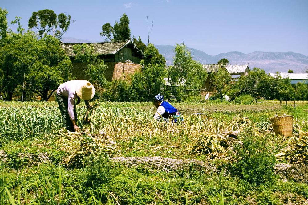 【国際】カーギルとCARE、3年間の提携継続を発表。未開発地域でのコミュニティ開発を実施 1