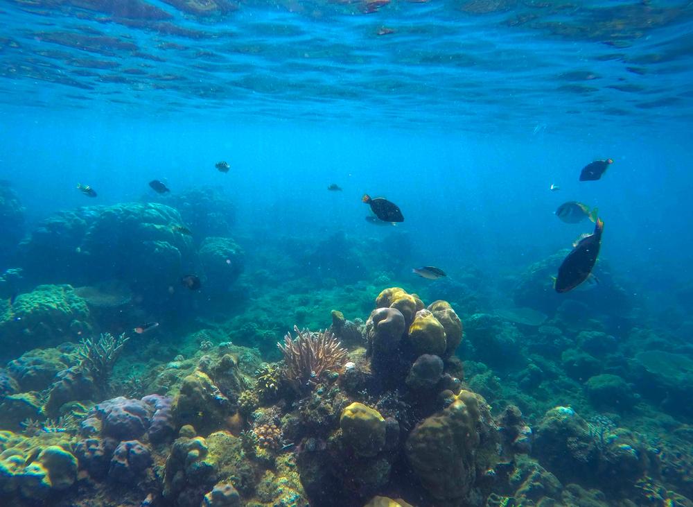 【日本】環境省、海洋生物レッドリストを作成。 56種が絶滅危惧種に指定 1
