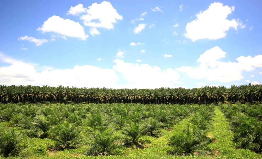 【アメリカ】カーギル、マレーシアでの小規模農家RSPO認証取得を促進。認証生産量は3倍に 1