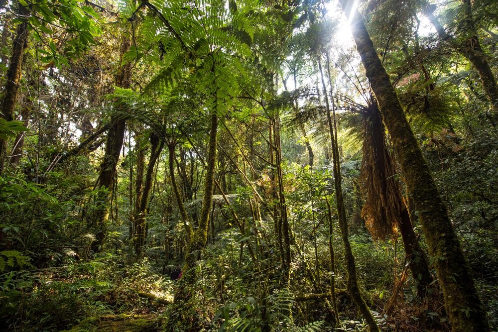【国際】コーヒー栽培と渡り鳥の生態系保護。バードフレンドリー認証の意義 1