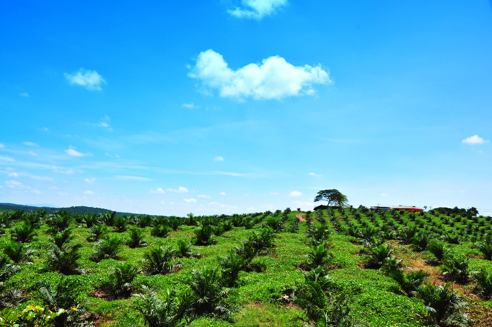 【マレーシア】パーム油大手IOIグループ、持続可能な調達実践の第三者機関監査を実施すると宣言 1