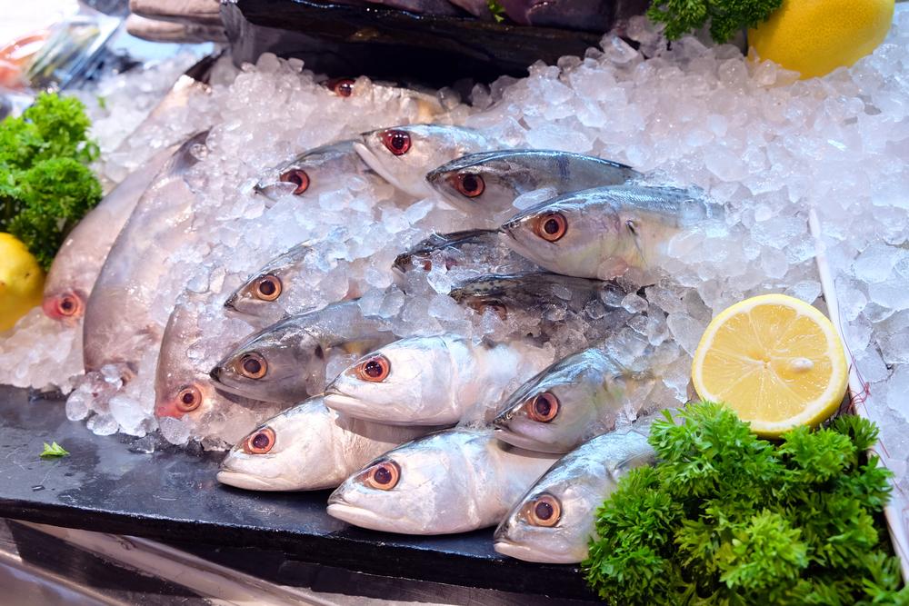 【国際】漁業認証MSC、認証のインパクト測定報告書を発表。水産資源量改善に寄与 1