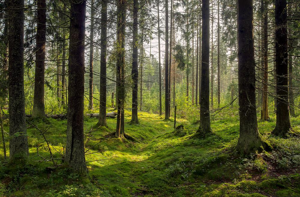【アメリカ】P&G、3M等、米国東部のサステナブル林業で新たなイニシアチブ発足 1