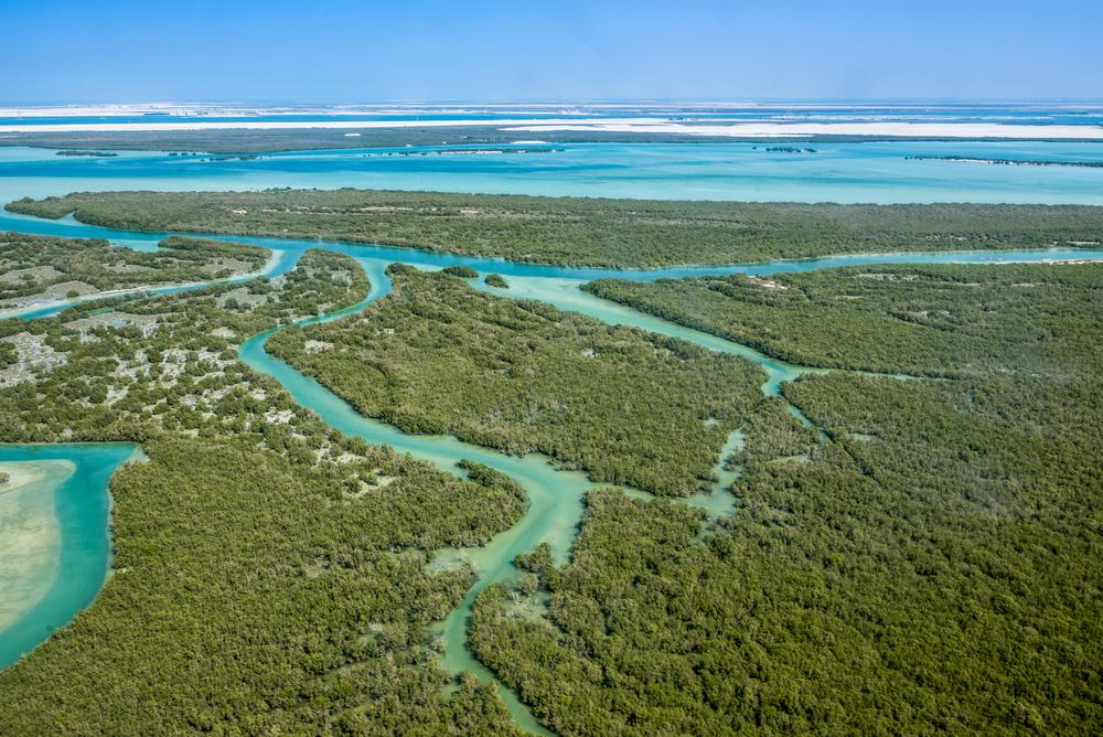 【国際】東南アジア等で水産養殖によりマングローブが大きく消失。学術研究論文 1