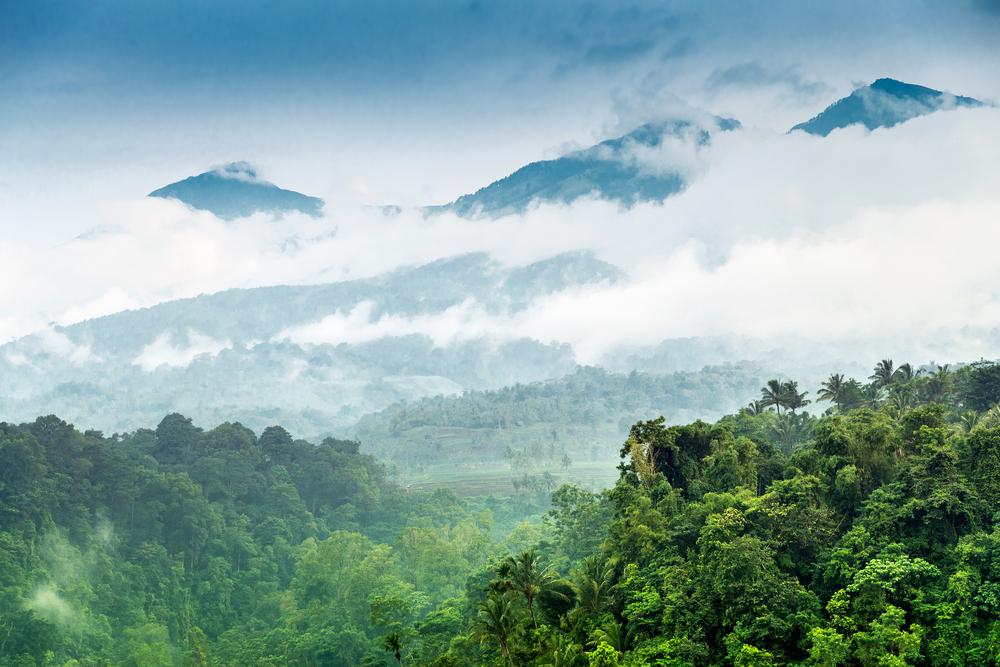 【イギリス】HSBC、RSPOにインドネシアのパーム油生産企業への調査を要請。環境NGOの指摘が背景 1