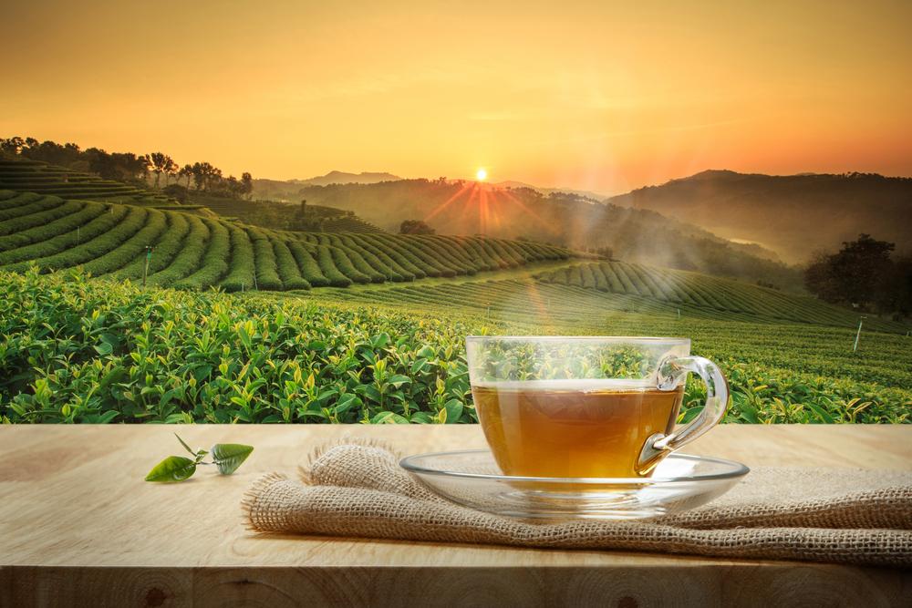 【イギリス】ウェイトローズ、PB商品の茶葉100%をフェアトレード認証に切替 1