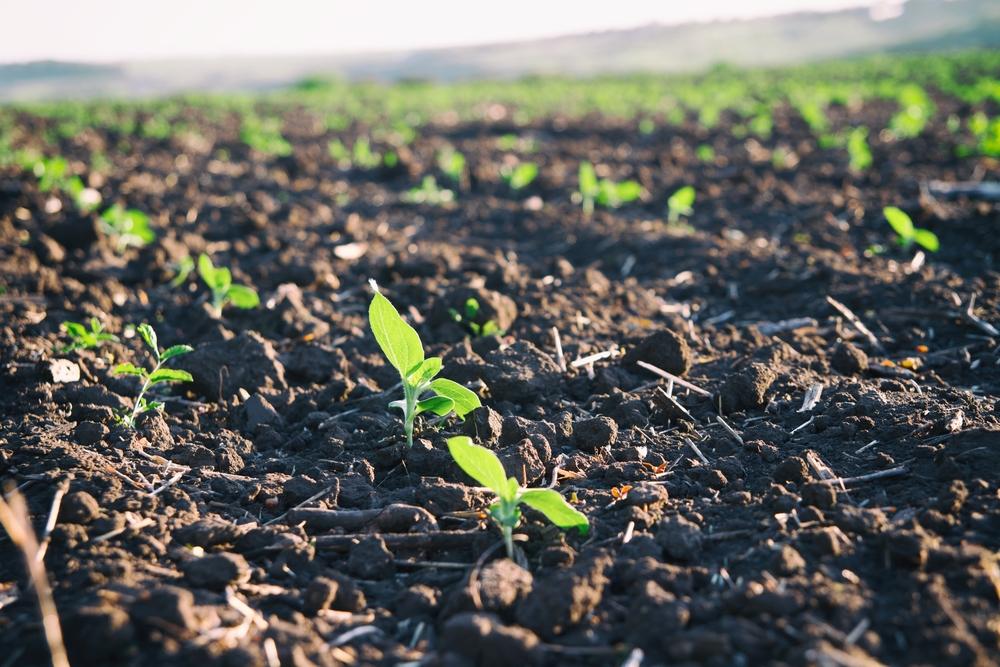 【国際】BASFとKaiima Bio-Agritech、非遺伝子組換え型の除草剤耐性品種の開発で協働 1