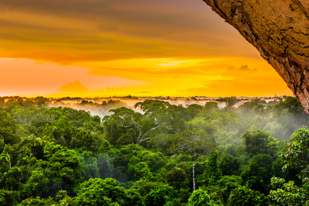 【インドネシア】環境NGOのRAN、パーム油生産PT. ABNが大規模森林破壊を継続と発表 1