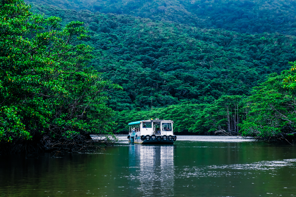 【日本】日本製紙、林野庁及び西表島エコツーリズム協会と西表島国有林の森林保全活動推進 1