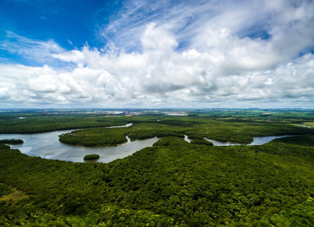 【ブラジル】国際環境NGOのCI、アマゾンで世界最大の森林再生プロジェクト開始。政府、国際機関とも連携 1