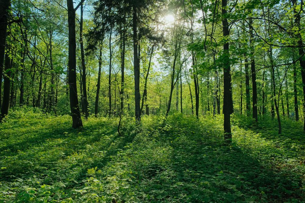 【国際】PRIとCeres、森林破壊を食い止める機関投資家の集団的エンゲージメントを発足 1