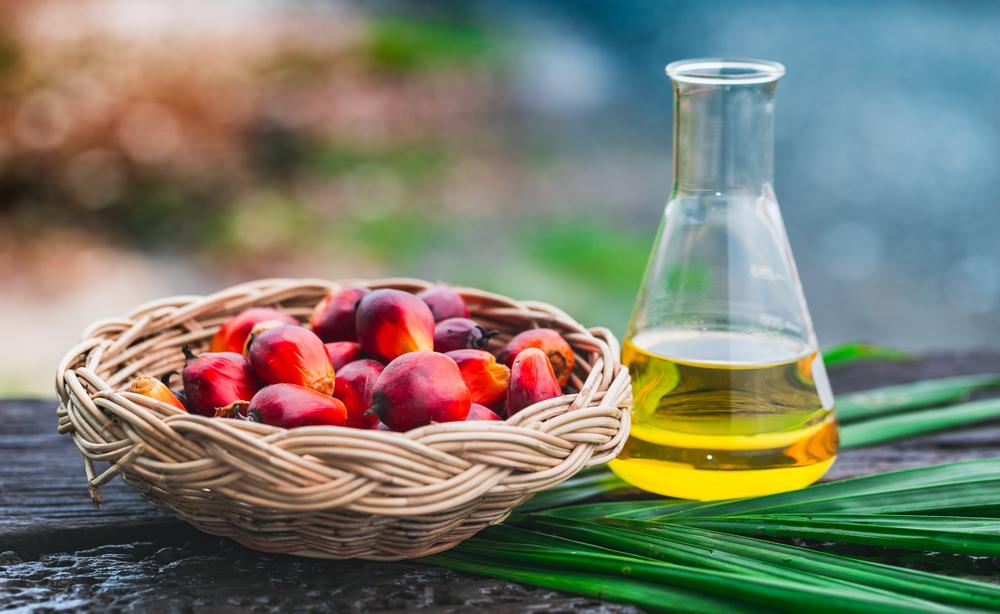 【11/6@東京 イベント】持続可能なパーム油会議-2020年に向けたパーム油調達のあり方を考える- 1