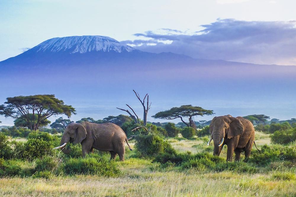【アメリカ】トランプ政権、ジンバブエとザンビアからの象牙輸入解禁方針をわずか2日で撤回 1