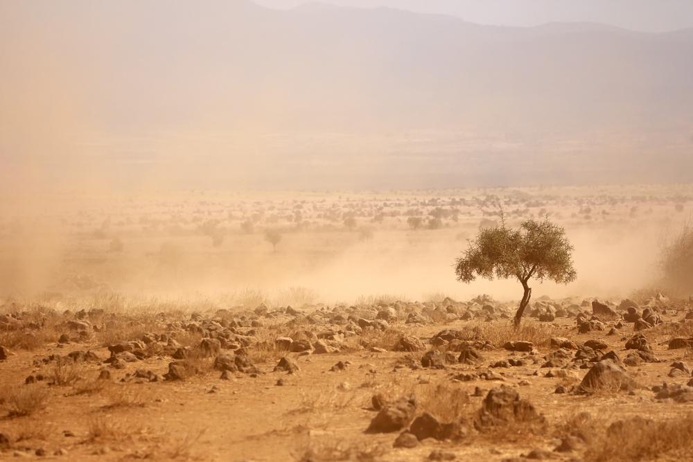 【アフリカ】BNPパリバ財団とビル&メリンダ財団、アフリカの気候変動適応で研究者支援プログラム創設 1