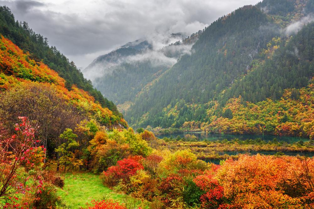 【中国】国家林業局、2035年までの大規模森林育成計画発表。2018年だけでアイルランドの面積分 1