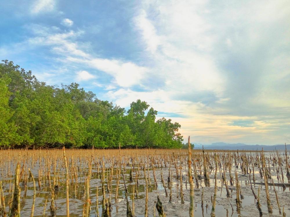 【インドネシア】地理空間情報庁、泥炭地観測でInternational Peat Mapping Teamのシステム採用 1