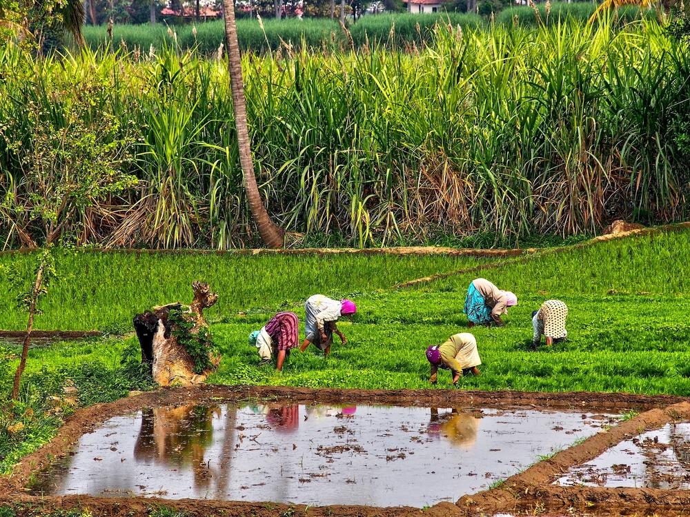 【国際】FAO、自然災害により過去10年で約10兆円の農業損害が発生。旱魃が最も深刻 1