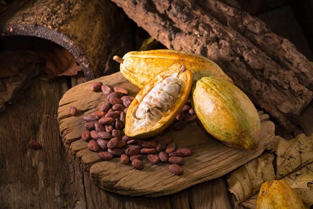 【コートジボワール】フェアトレードUSAと仏PUR Projet、農家のカカオ生産改善・森林保護で連携 1