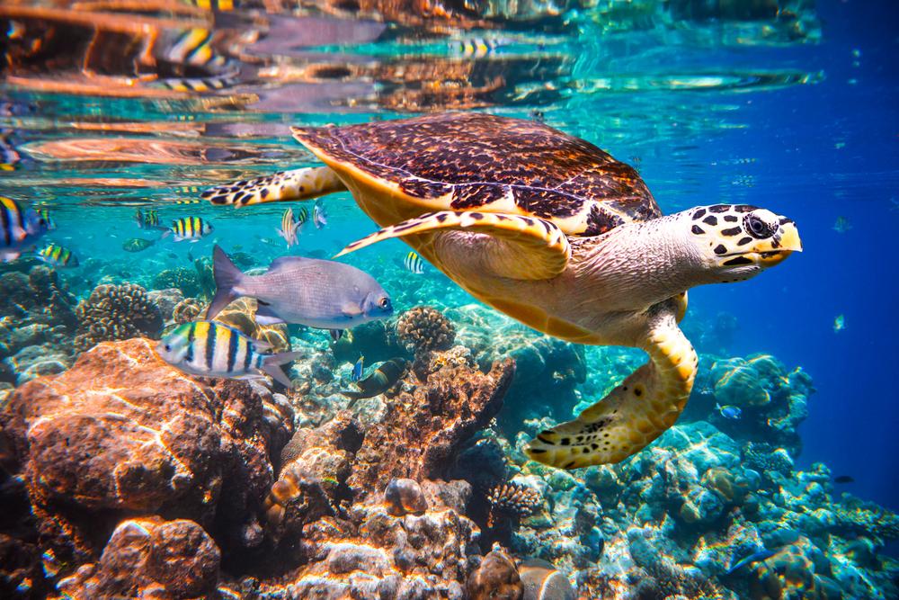 【国際】EIBやWWF等、海洋保護のためのブルーファイナンス原則発足。署名機関募る 1