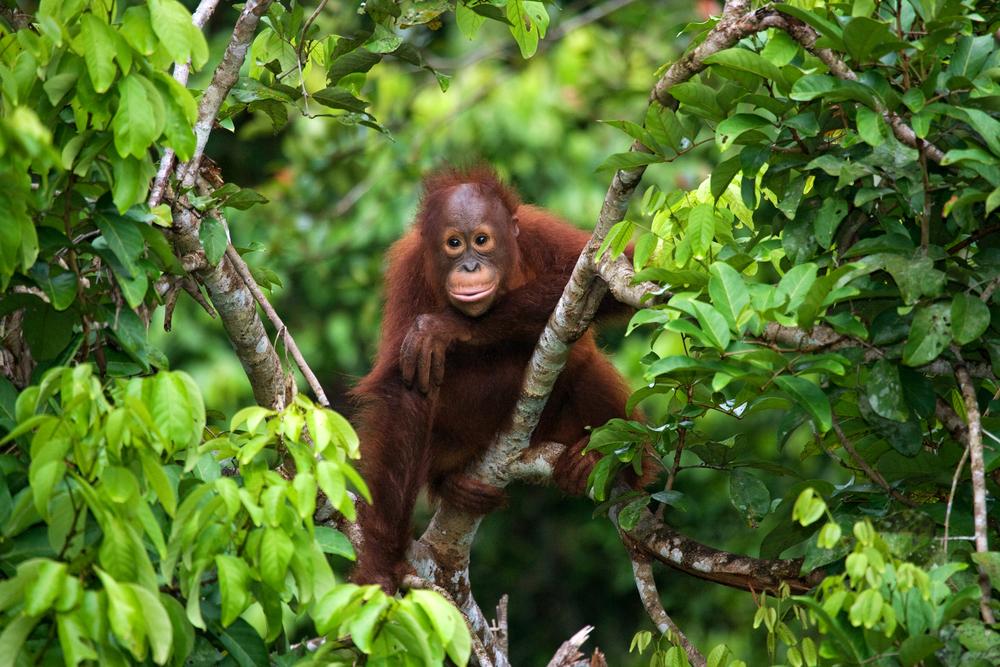 【インドネシア】英LUSH、SOSsumatraキャンペーンの売上全額をスマトラ島の森林購入に充当 1