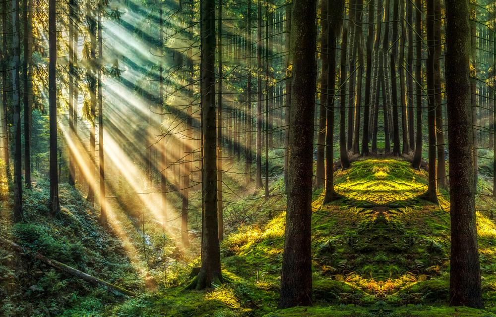 【国際】グリーンピース、森林管理協議会FSCから脱退。認証の透明性向上が必要だと主張 1