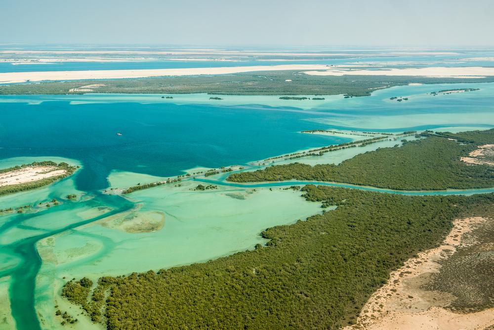 【国際】環境NGOのTNCと保険大手XL Capitalが提携。沿岸湿地帯保護のカーボン・クレジット制度開発 1