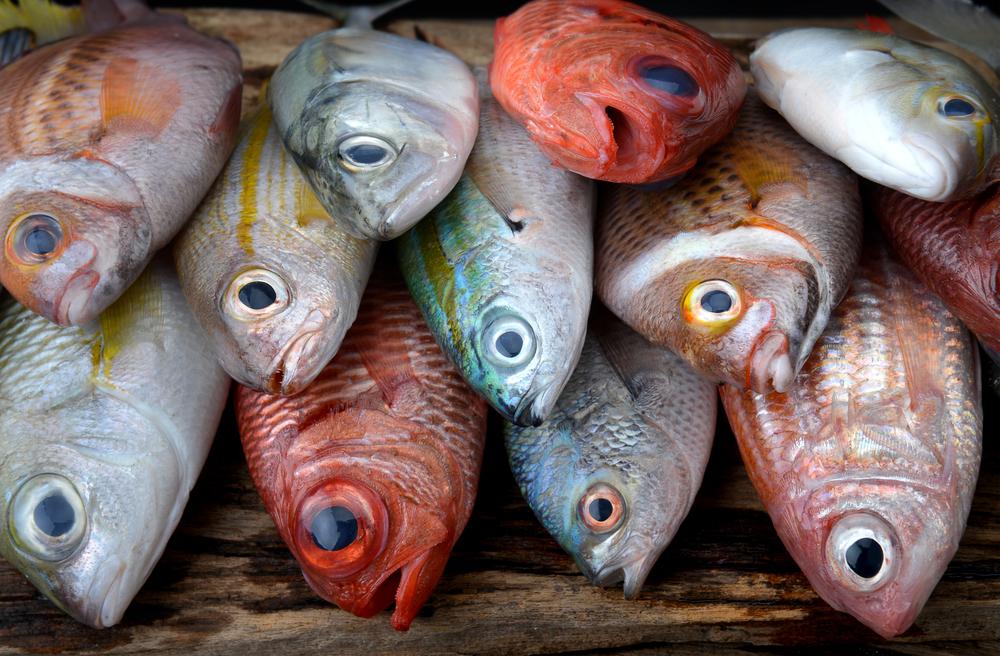 【日本】政府、水産資源管理に最大持続生産量(MSY)概念導入。規制対象魚種を大幅拡大の方向 1