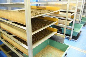 【食品】ハエで食糧危機と有機廃棄物問題を同時に解決。世界が注目する日本企業「ムスカ」 2