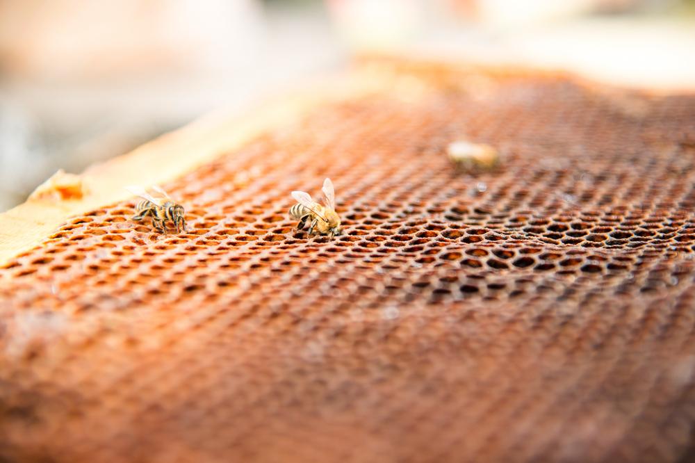 【フランス】ネオニコチノイド系農薬5種の農業使用を禁止法が施行。蜂等の送粉者保護 1
