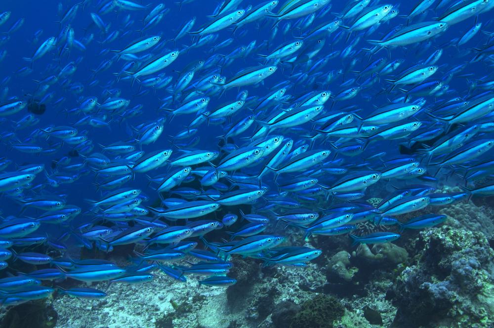 【ノルウェー】公的年金運用NBIM、世界中の企業の取締役会に海洋サステナビリティへの取組を要請 1