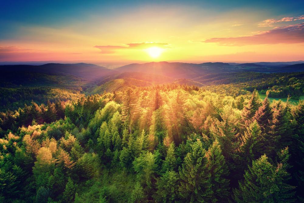 【国際】UNEP、世界の森林景観回復(FLR)の状況に関するレポート発表。50ヶ国で行動展開 1