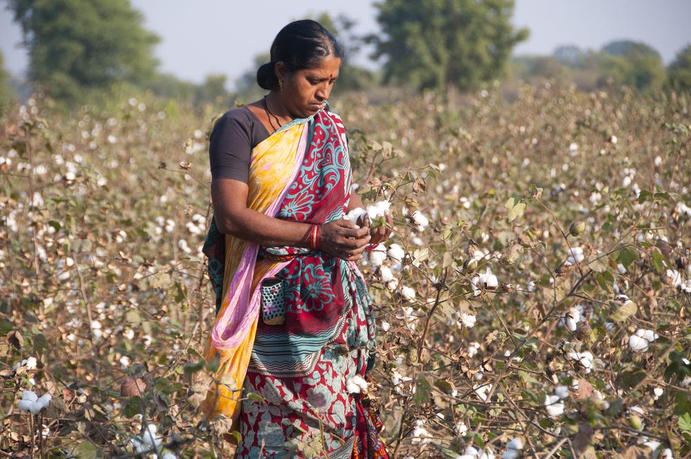 【インド】スイス化学大手シンジェンタの有害殺虫剤、インド綿花農園で使用し死者多数。NGO発表 1