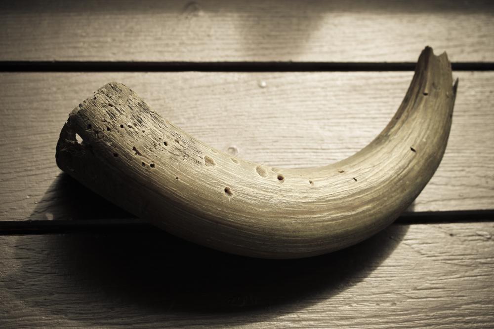 【日本】WWFジャパン、日本IT大手の象牙取引対応状況報告。ヤフーを批判、楽天・メルカリは改善 1