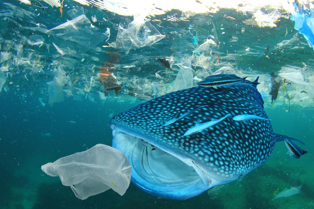 【アメリカ】党派不問で81%の国民が海洋プラスチック問題に懸念。環境NGO調査 1