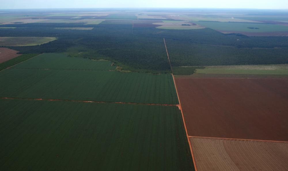 【ブラジル】農業大手、銀行、環境NGO、カンポ・セラードの持続可能な豆農家支援で連携。新融資スキーム 1