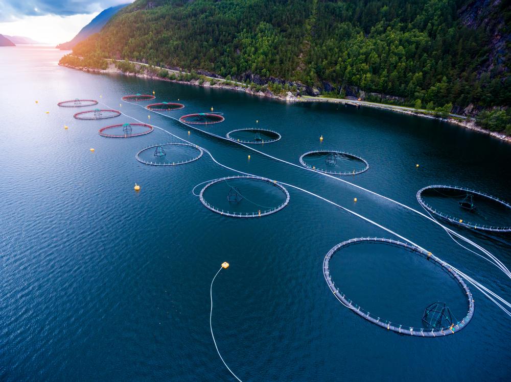 【アメリカ】フェアトレードUSAと養殖認証ASC、水産事業者の所得向上に向け新プログラム展開で協働 1