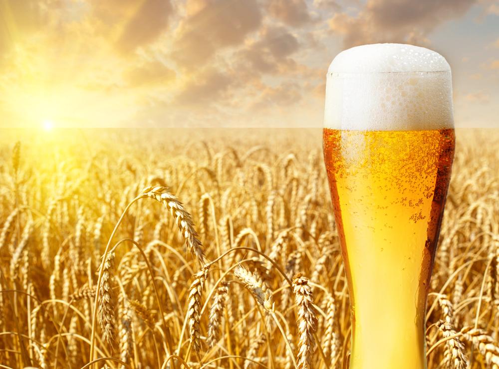 【国際】「気候変動によりビール価格が世界中で高騰の見通し」。英大学教授ら論文 1