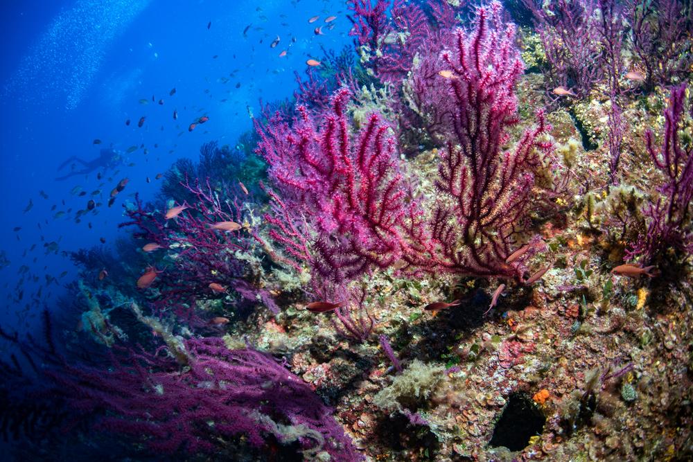 【EU】「EU加盟国海域の10%が海洋保護区に指定完了。愛知目標達成」欧州環境機関発表 1
