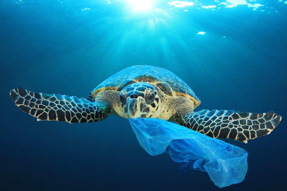 【EU】EIB、KfW、AFD、海洋プラスチック対策でファイナンス・イニシアチブ発足。2600億円規模 1