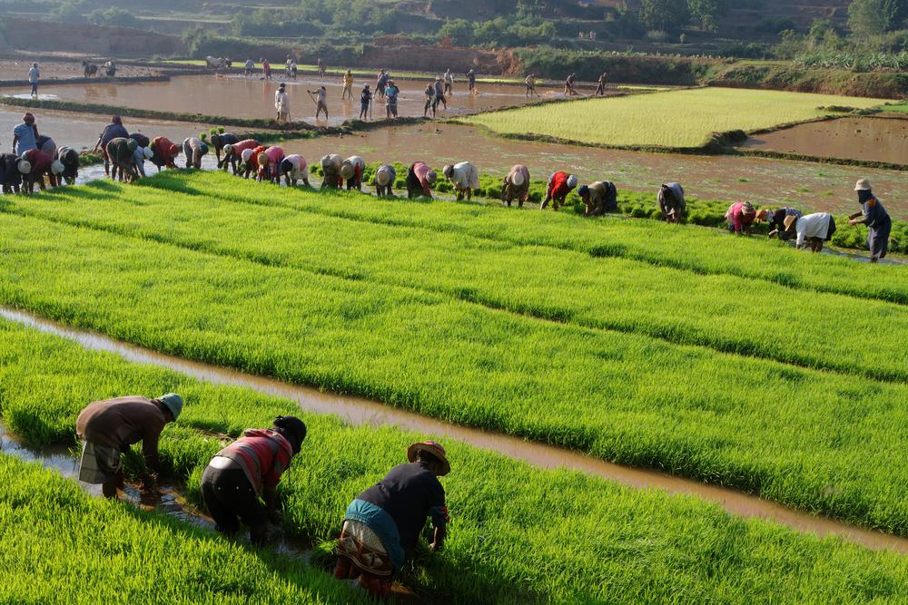 【アフリカ】アフリカ開発銀行、気候変動適応金融支援プログラム承認。公的パラメトリック保険整備等 1