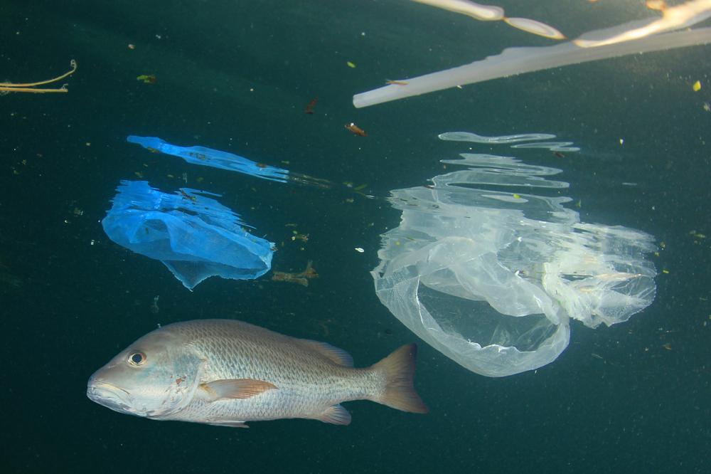 【国際】Sustainalytics、海洋プラスチック特集レポート発表。企業の戦略的重要性の認識低さに警鐘 1