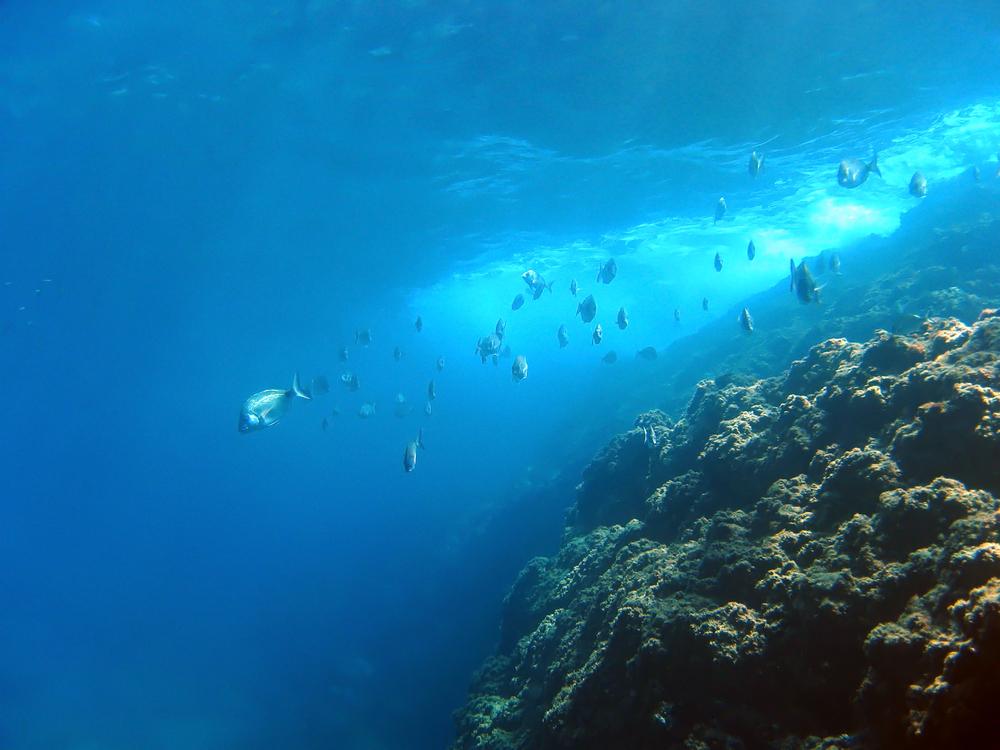 【国際】ブルームバーグ財団とダリオ慈善団体の「OceanX」、海洋保護で協働。210億円拠出 1