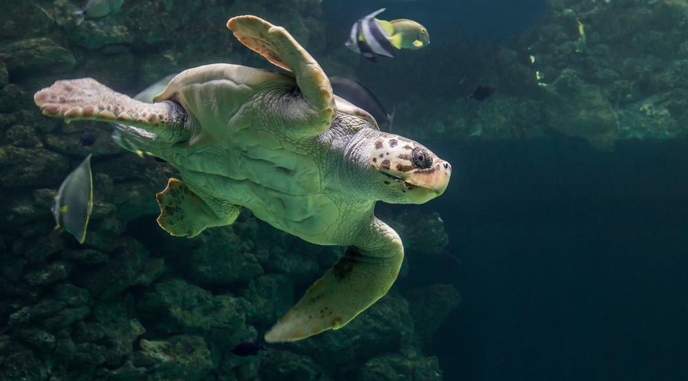 【国際】「過去40年間で世界の生物多様性は60%減少」WWFの生きている地球レポート2018 1