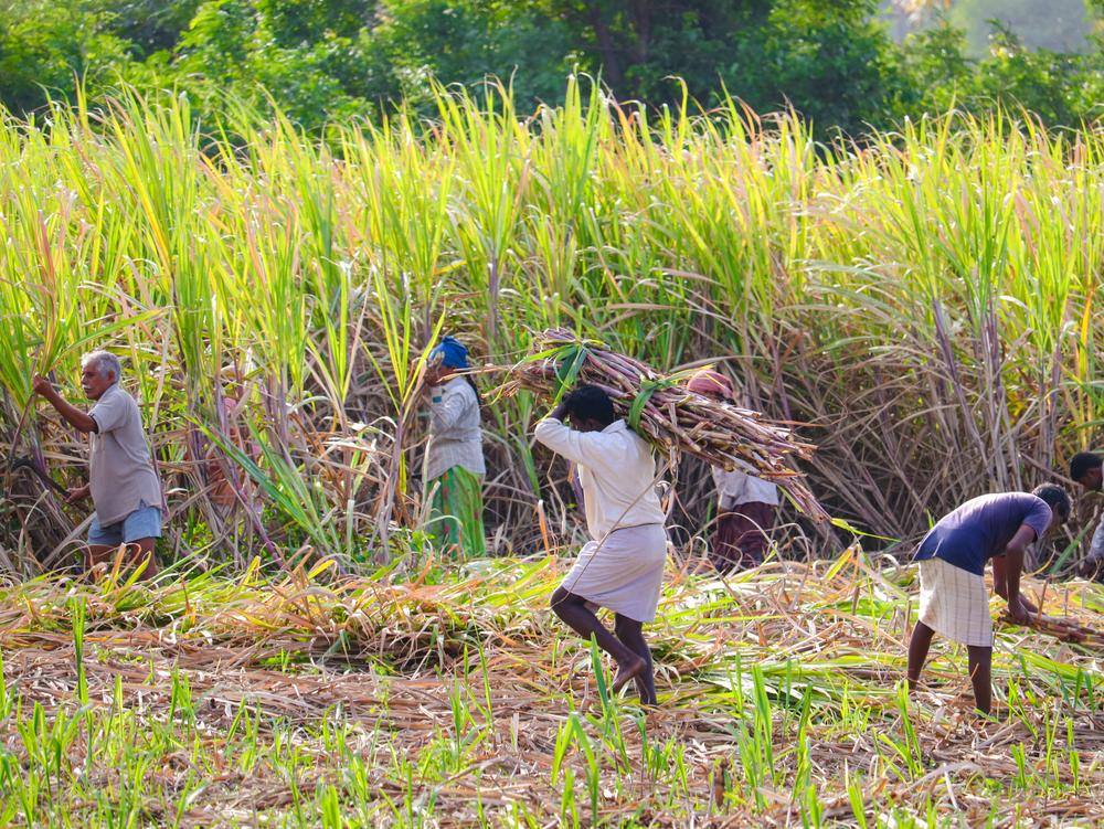 【インド】オックスファム・インド、砂糖業界の環境・社会課題を報告。企業は農園まで見に行く必要 1