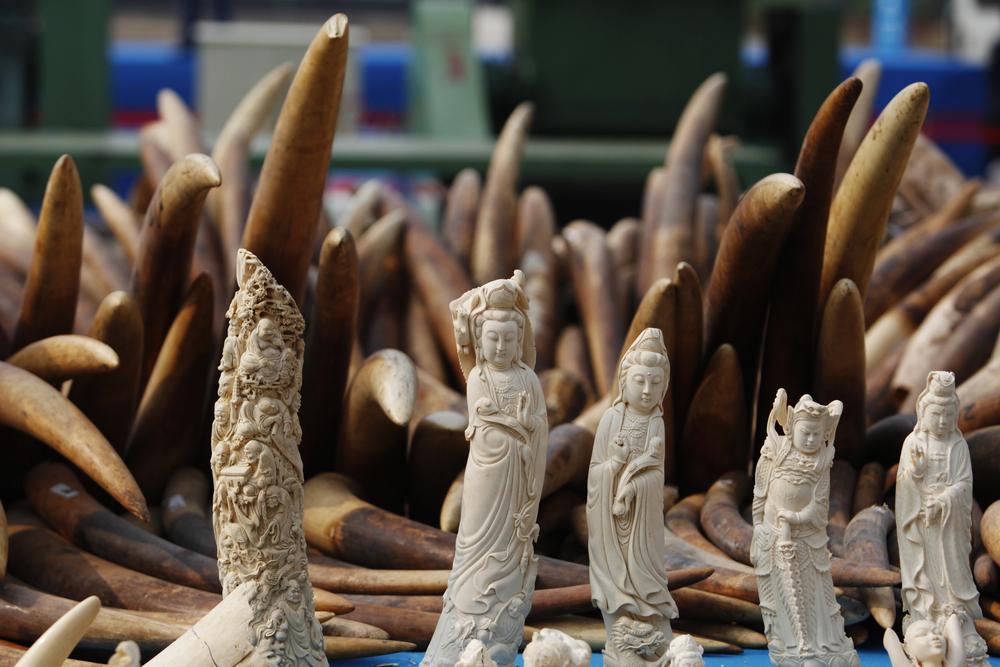 【イギリス】象牙取引を全面禁止する象牙法、成立。2019年後半から施行予定 1