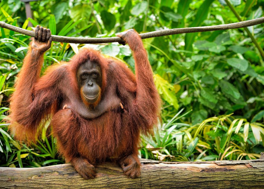 【日本】RAN、東京五輪会場設営での熱帯雨林破壊関与を東京都と日本スポーツ振興センターに苦情通報 1