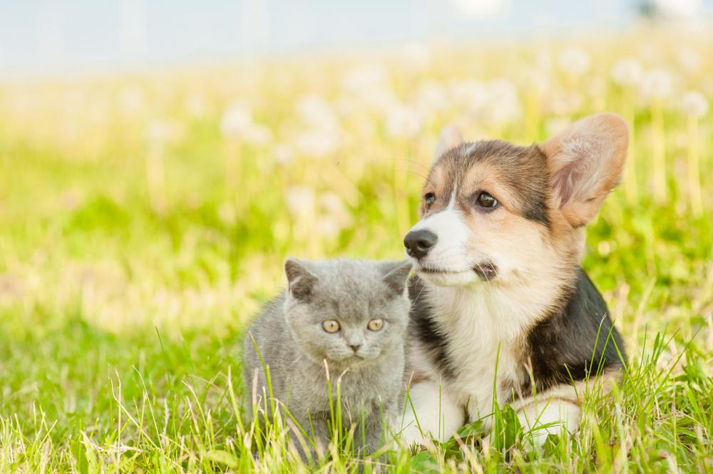 【イギリス】政府、子犬と子猫のペット仲介販売を禁止する方針。大量飼育型劣悪ブリーダーを排除 1